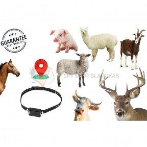 GPS SEKLYS MTK GYVULIAMS